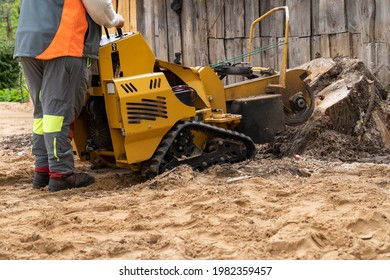 The process of removing a tree stump where the rotating head of the stump cutter grinds a freshly sawn stump.  The blades of the shredding disc divide the stump and the chips fly through the air.
