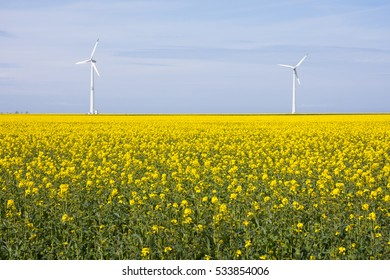 processed fields and windmills