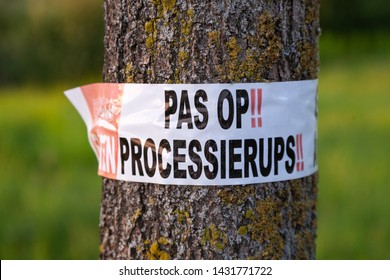 Processierups warning nature tree at the Netherlands