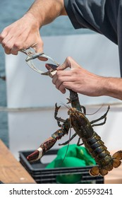 Processing Lobster