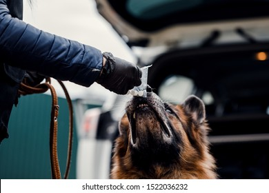Processing traces of the smell of a police dog on the street. The concept of police and law enforcement.