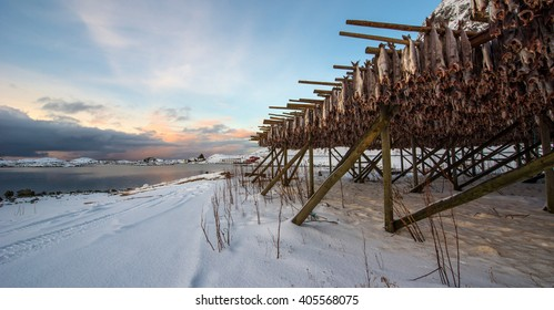 Producing stockfish from cod