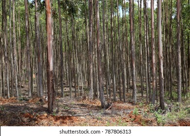 Production forest in Western Cape, South Africa