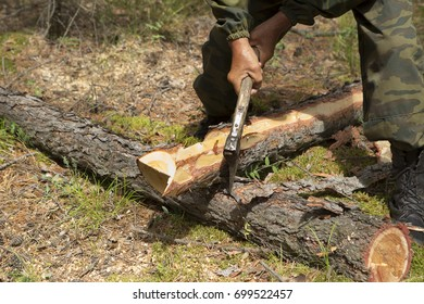 Production of the index of the direction of sanitary felling of wood in the Siberian taiga by an ax. The inspector of the forest carpenter's ax removes bark from a tree in a forest glade.