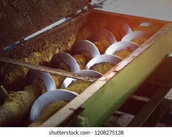 Production of rapeseed oil, processing of oilseed rapeseed, supply of rapeseed oil seeds to the cold pressing press, colza, production