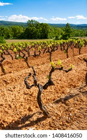 Production of rose, red and white wine in Luberon, Provence, South of France, landscape with vineyard on ochre soil in early summer