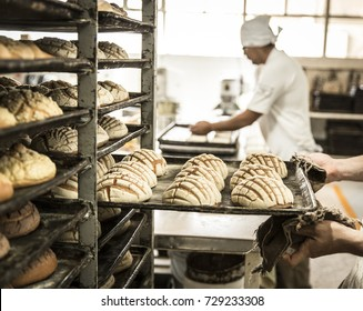 production of shells in the personal bakery