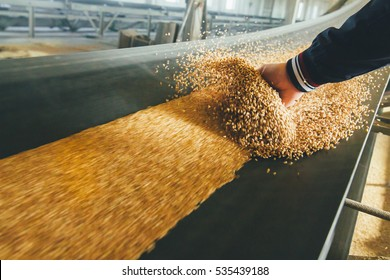 Production of wheat flour