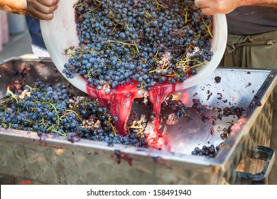 production of wine with red grape