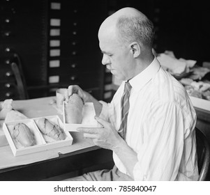 Prof. Charles Gilmore of Smithsonian Institution with fossil dinosaur eggs, 1924. Gilmore, Curator of Fossil Reptiles, worked on 24 fossil reconstructions for the museum
