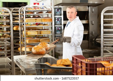 Professional baker taking out freshly baked hot bread from oven in small bakery