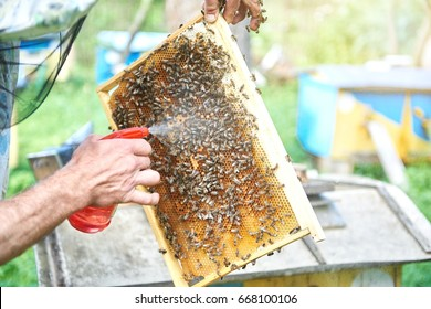 Professional beekeeper spraying honeycomb with bees working technology harvesting honey beekeeping hobby lifestyle organic natural food concept.