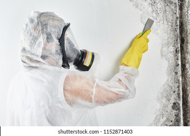 A professional disinfector in overalls processes the walls from mold with a spatula. Removal of black fungus in the apartment and house. Aspergillus.