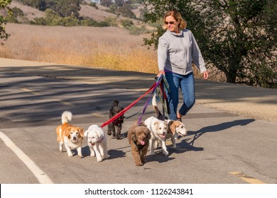 Professional female dog walker walking a pack of small dogs on park trail