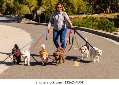 Professional female dog walker walking a pack of small dogs on a bike trail