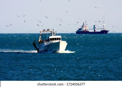 professional fishing boat goes into the harbor. Surrounded by many seagulls in France