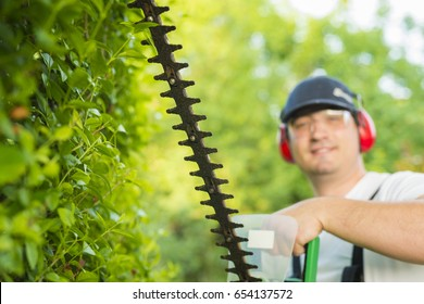 Professional gardener holding hedge trimmer in his hands. Bush pruning work. Gardening and cutting activities.