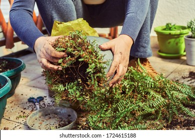 Professional gardener take care of her plants. Gardening concept.