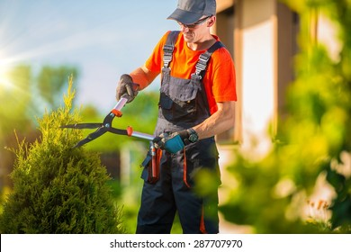Professional Gardener Trimming Plants in the Garden. Gardener Using Bush Trimmer.
