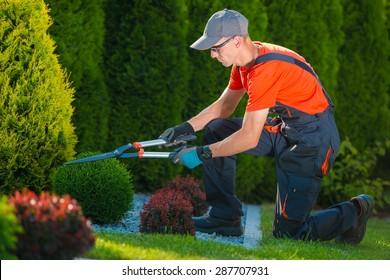 Professional Gardener at Work. Gardener Trimming Garden Plants. Topiary Art.