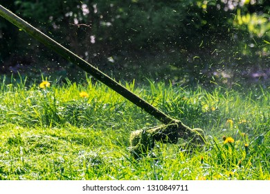 professional grass mowing in the park. green lawn with yellow dandelions. close up shot of gasoline trimmer head with nylon line cutting fresh green grass to small pieces. side view of back lit scene