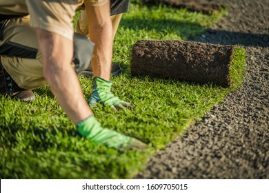 Professional Landscaper Lay Natural Grass Turfs. Natural Grass Installation. Gardening Industry Theme.