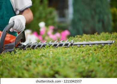 Professional male gardener, wearing in special overalls with protective glove working with professional garden equipment in backyard. Hedge trimmer cutting bushes to ideal fence. Gardening concept.