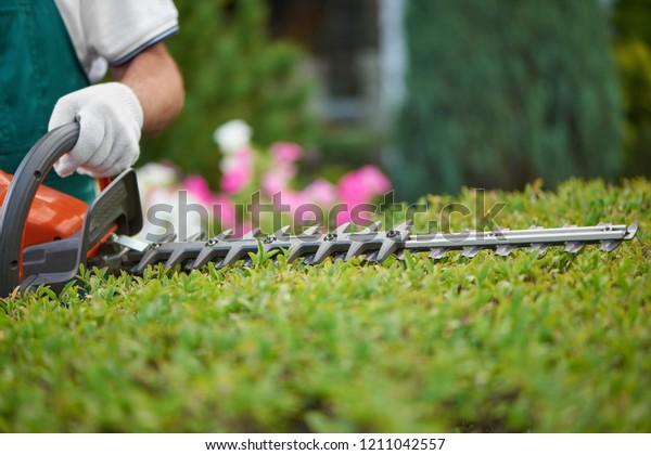 Professioneller männlicher Gärtner, der in speziellen Overalls mit Schutzhandschuh arbeitet und im Garten mit professioneller Gartenausrüstung arbeitet. Hedge-Schneidebüsche zum idealen Zaun. Gartenkonzept.