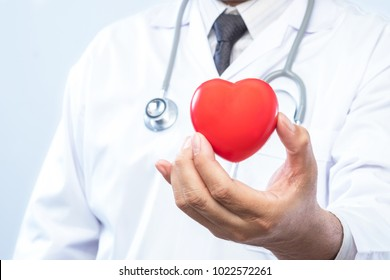 Professional medical doctor holding a red heart ball in the hospital. Concept of health care.
