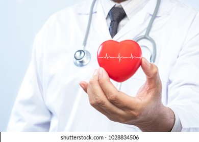 Professional medical doctor holding a red heart ball and cardiogramon. Concept of health care.