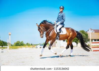 Professional racehorse. Experienced handsome horse man riding professional dark brown racehorse
