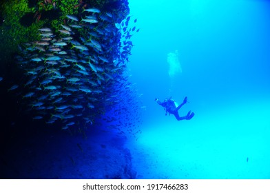 A professional scuba diver watching the swimming fish in the Atlantic Ocean in Cape Verde