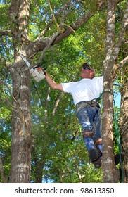 Professional Tree Man Trimming Oak Tree