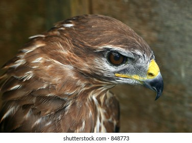 A profile of a buzzards head.