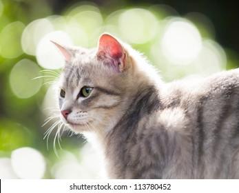 Profile of cat
