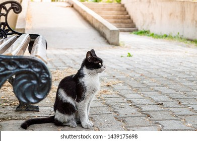 Profile of a dirty black and white colored stray cat sitting near a bench in a park.