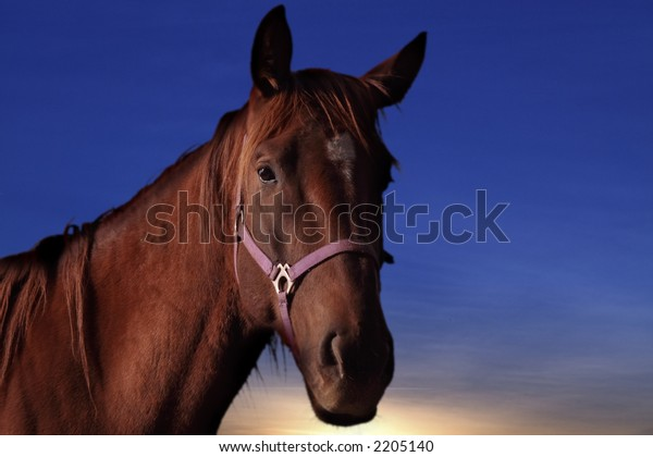 Profile of Domestic Horse with Sunset Background