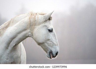 Profile of the horse