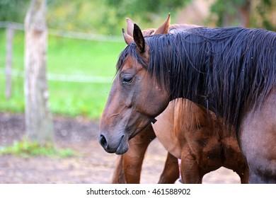 Profile of a horse