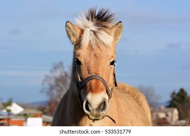 Profile of a horse