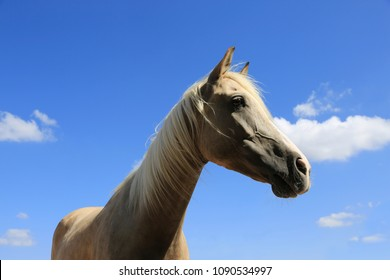 Profile of a horse against the blue sky