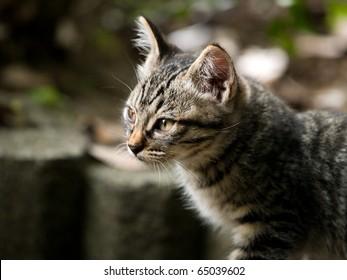 Profile of a kitten