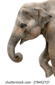 Profile portrait of a happy elephant isolated on pure white