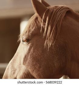 A profile portrait of a horse.