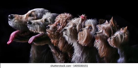 Profile portrait of seven dogs