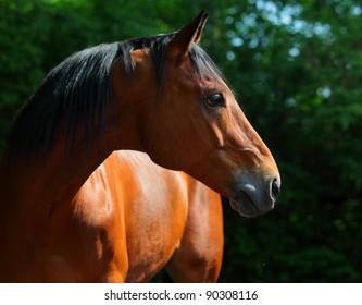 Profile portrait of a splendid purebred horse