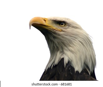 A profile shot of a Bald Eagle, composed from below, looking up at the bird's head and neck.  Isolated on a white background.