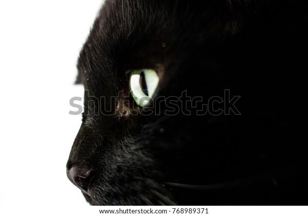Profile Shot of a Black Cat