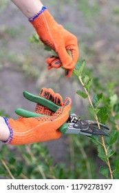 Profile side view vertical cropped photo of young woman hands in orange glows hold pruners shears garden secateurs used for clipping path cutout green tree branches