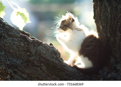 profile of a small fluffy kitten in nature in the sun on a tree